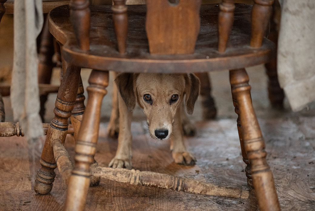 a dog hiding under a chair