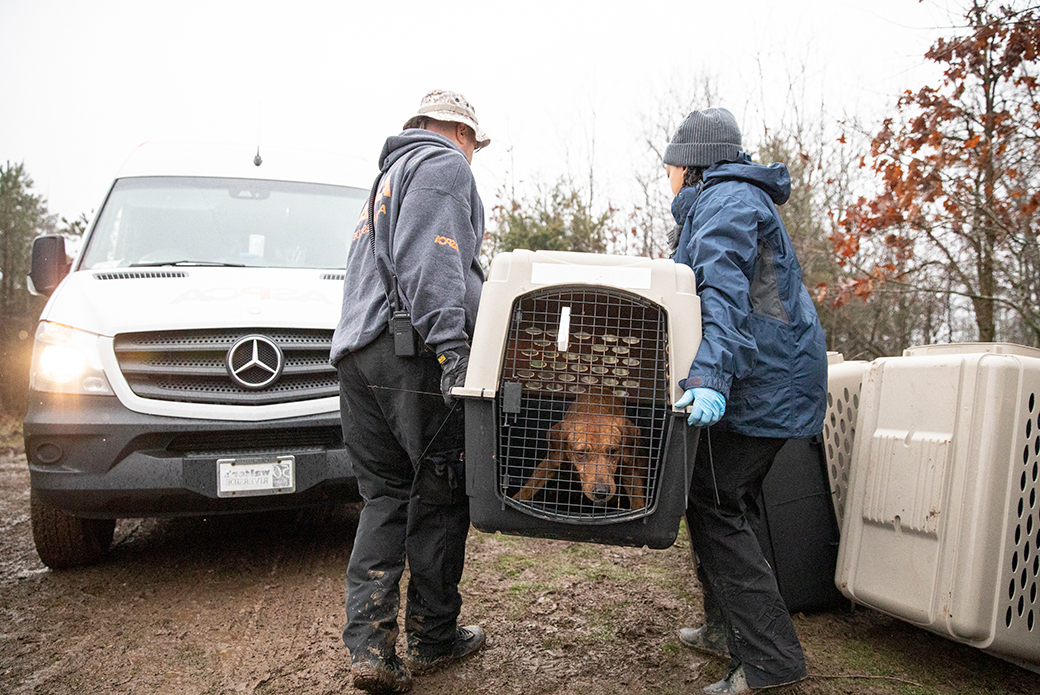 rescued dog in a carrier being moved to a transport