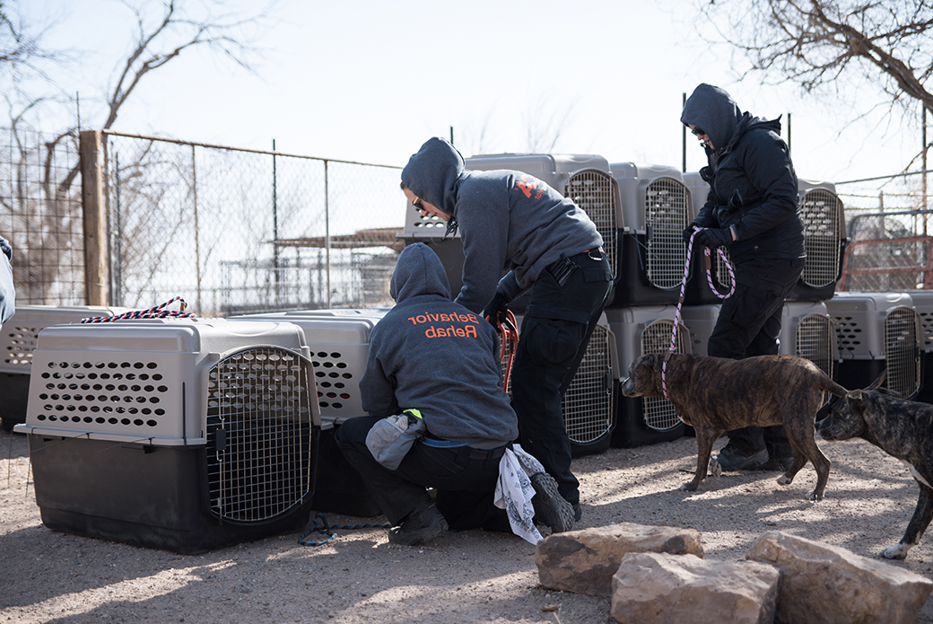 ASPCA team prepping rescued dogs for transport